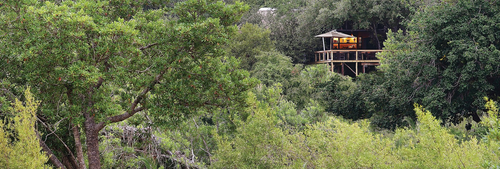 Londolozi Tree Camp Iconic Africa Luxury Safaris