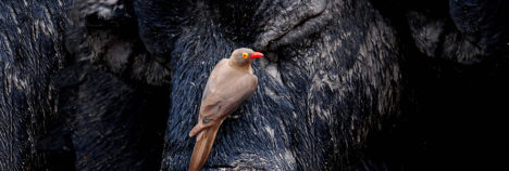 The beauty of Africa's Symbiosis