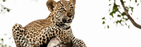 Londolozi's unbelievable sightings