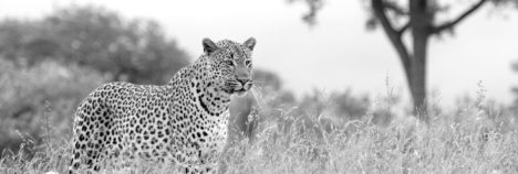 Africa's most magnificent