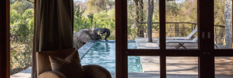 African wildlife on your door step