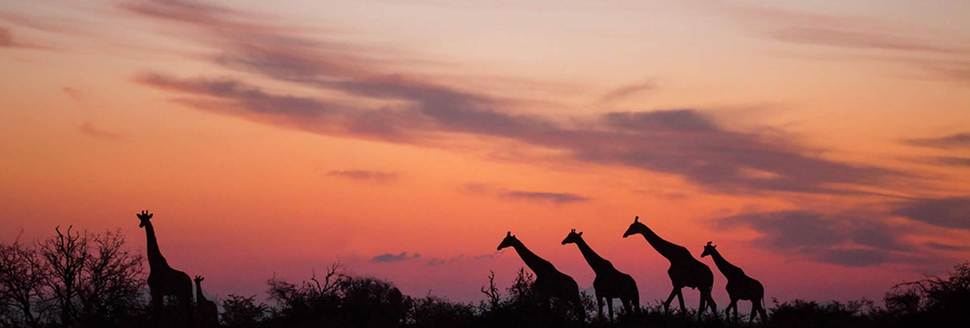 Spectacular sunsets over the Kalahari Desert