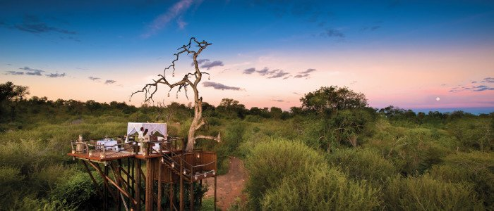 Ivory Lodge Lions Sands Tree House Experience
