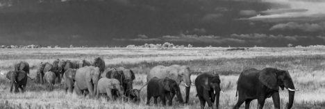 A family safari experience