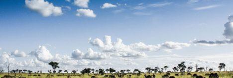 Singita's combined sanctuary of over 500000 acres
