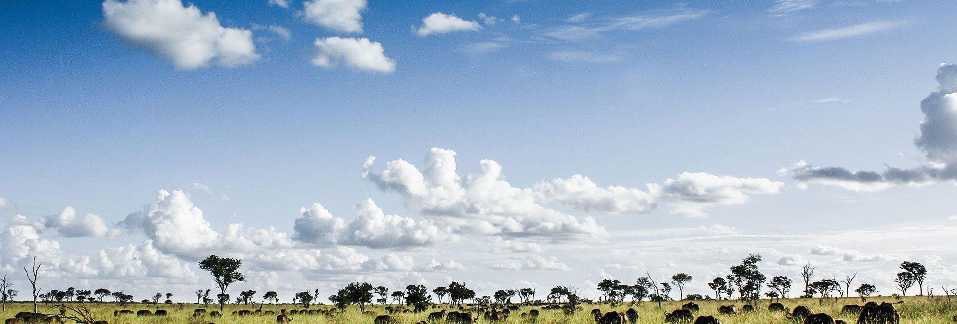 Singita Sabi Sands Kruger Park