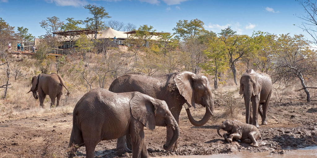 Elephant Camp Vic Falls Safari Camp