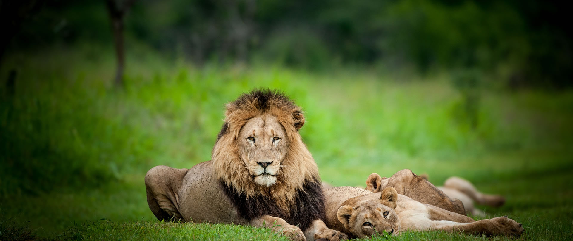 Africa's majestic wilderness experiences
