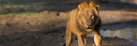 African encounters which will leave you in complete awe