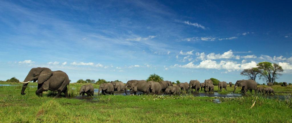 Beautiful Botswana Duba Banner
