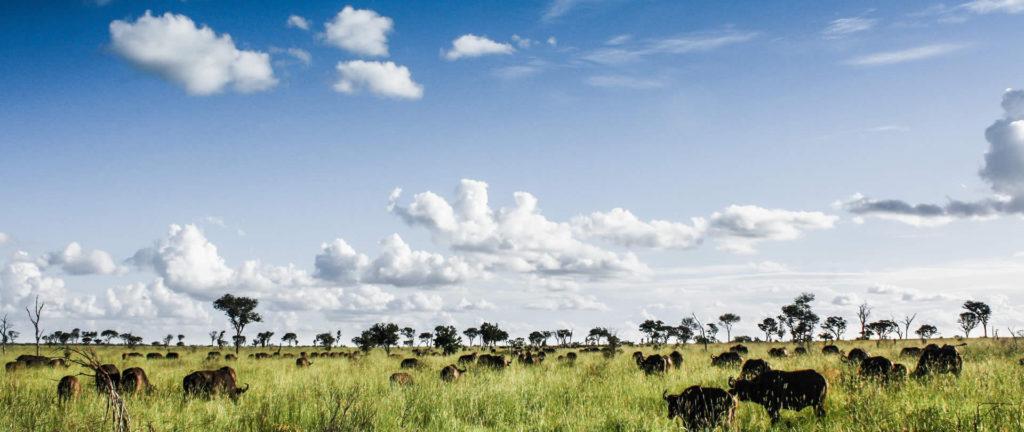 Selinda Camp Selinda Spillway Botswana Safari