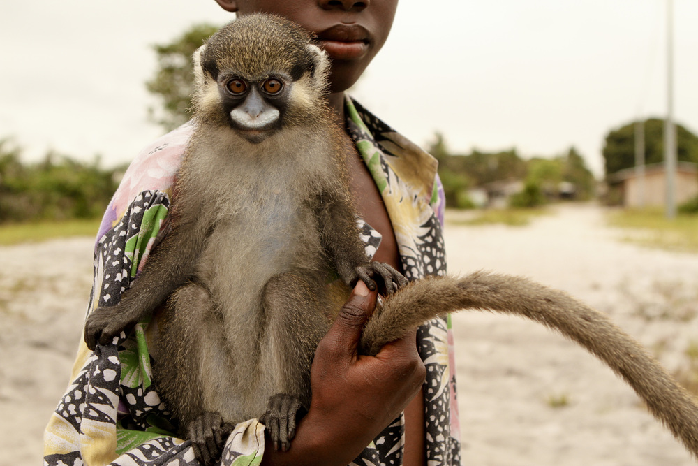245+MOUSTACHED+GUENON+WITH+BOY,+LOANGO+NATIONAL+PARK,+GABON