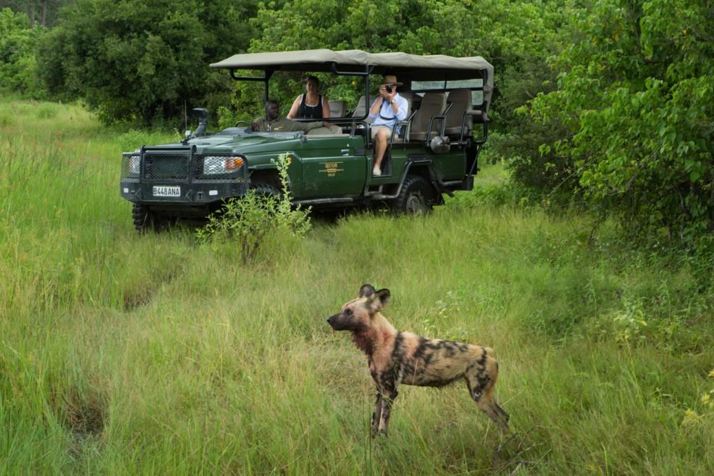 Selinda Camp Botswana Wild Dogs