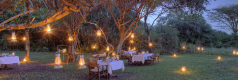 Starlit dinners under the trees