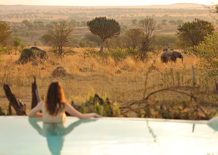 sayari-swimming-pool-watching-elephants-landscape