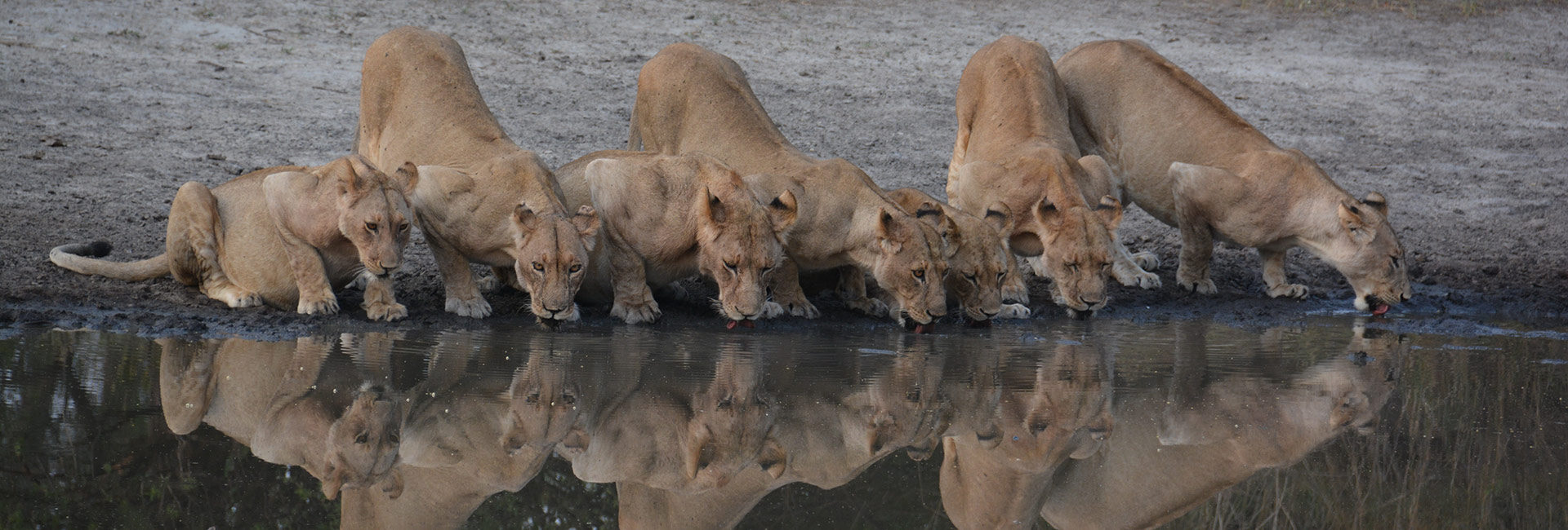 Once-in-a-lifetime Big Five encounters