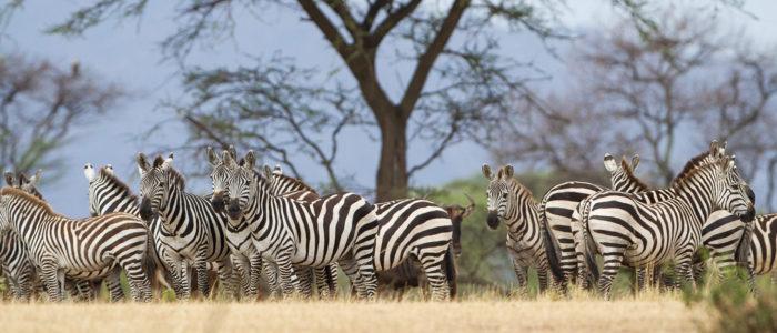 Ngorongoro_Highlands-15-700x300