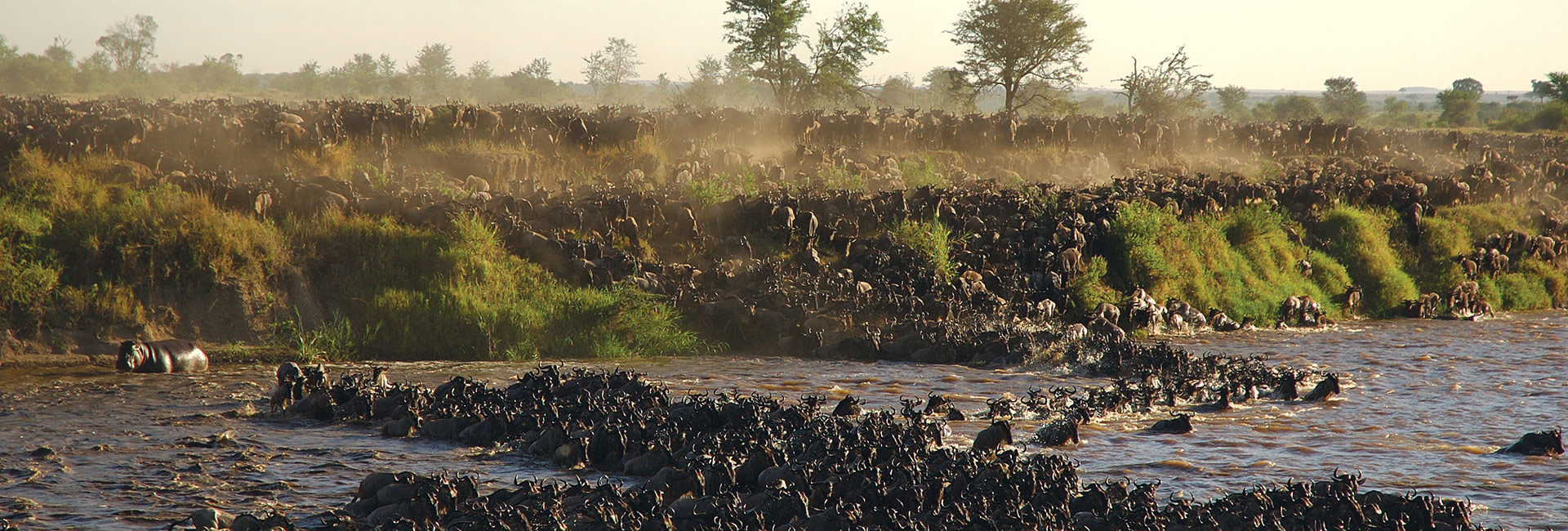 Witness the phenomenon of the Great Migration