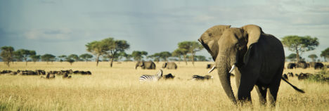 In amongst Africa's finest creatures