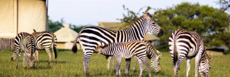 Africa's most exquisite on your doorstep