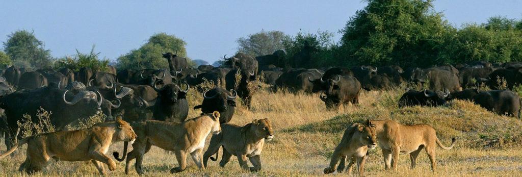 Unbelievable wildlife encounters