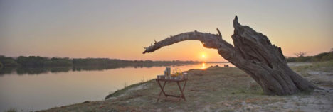 Get up close and personal with Chobe's elephants