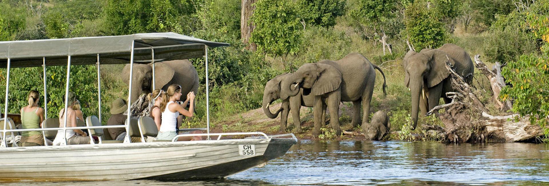 See Chobe's Amazing Elephants
