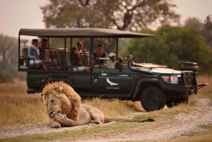 chobe-beyond-under-canvas-game-drive-lions