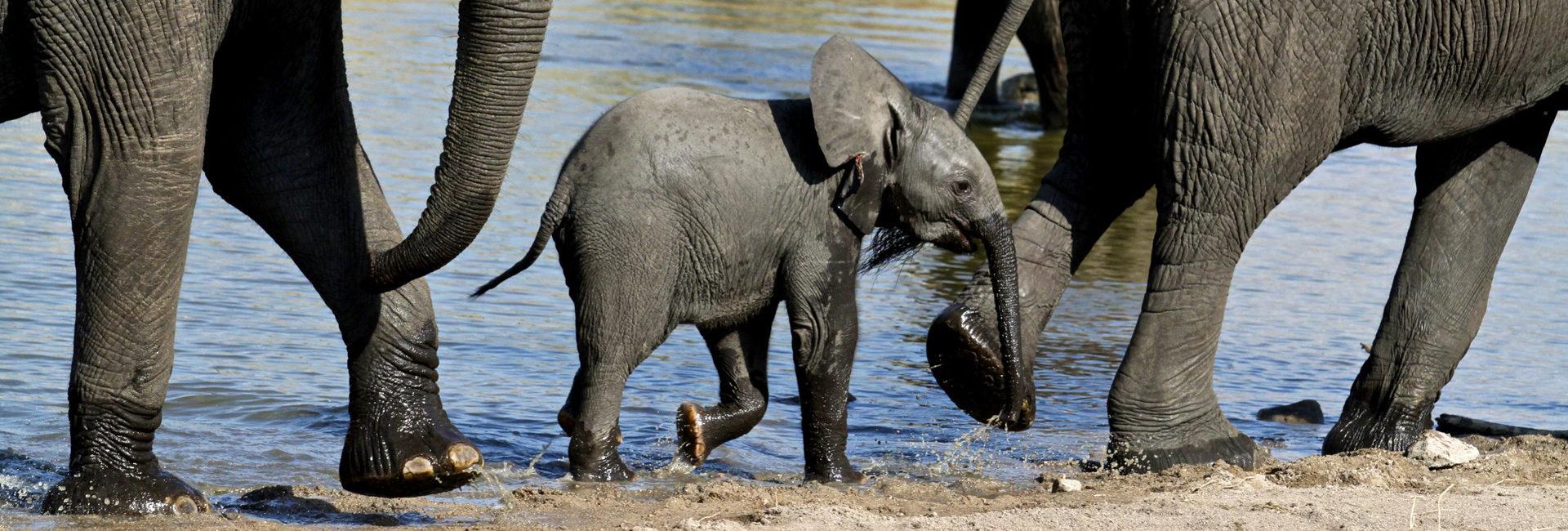 Amazing Elephant Sightings
