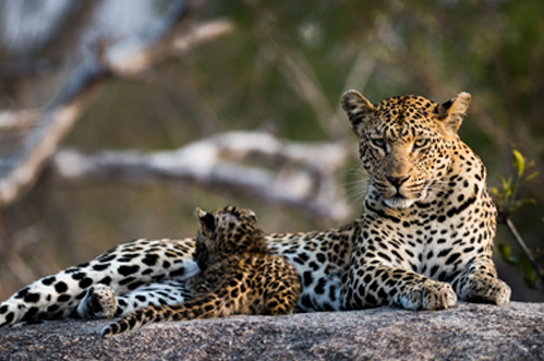 Iconic-Africa-Luxury-Kruger-National-Park-safaris-4