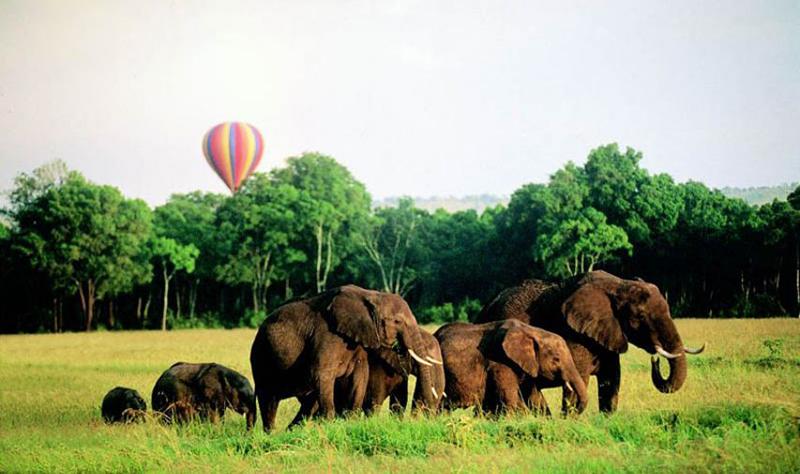 Elephants Balloon SAfari Governers Balloon Safaris