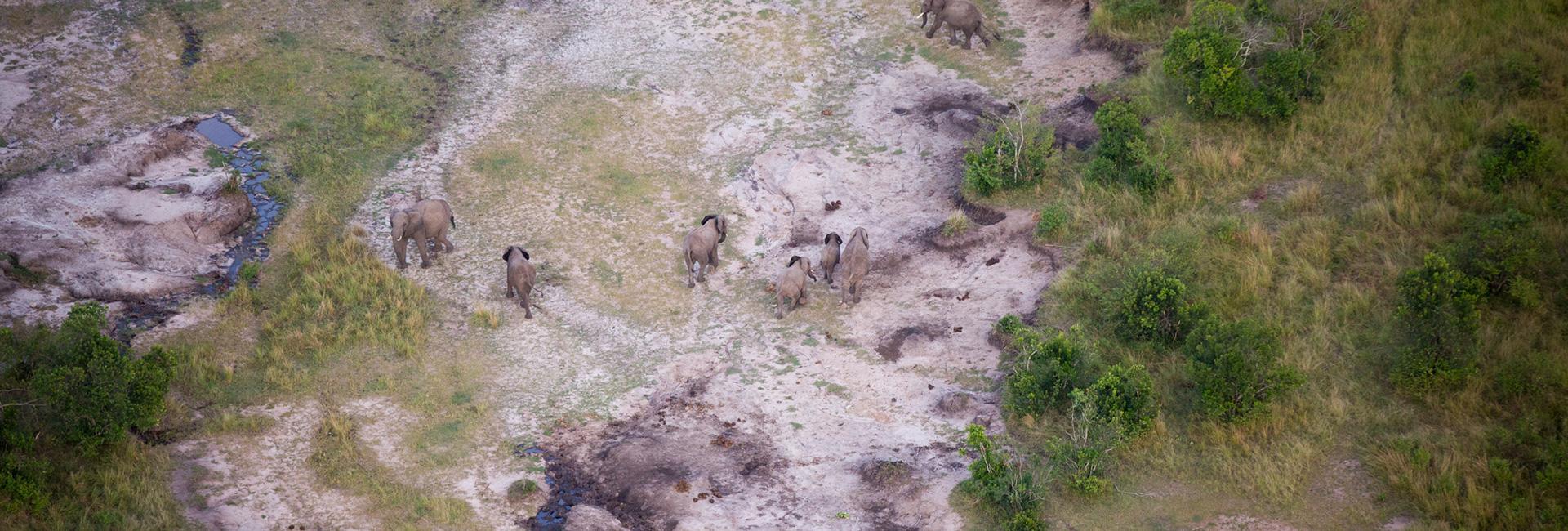 Elephants from Above Balloon Safari Iconic Africa