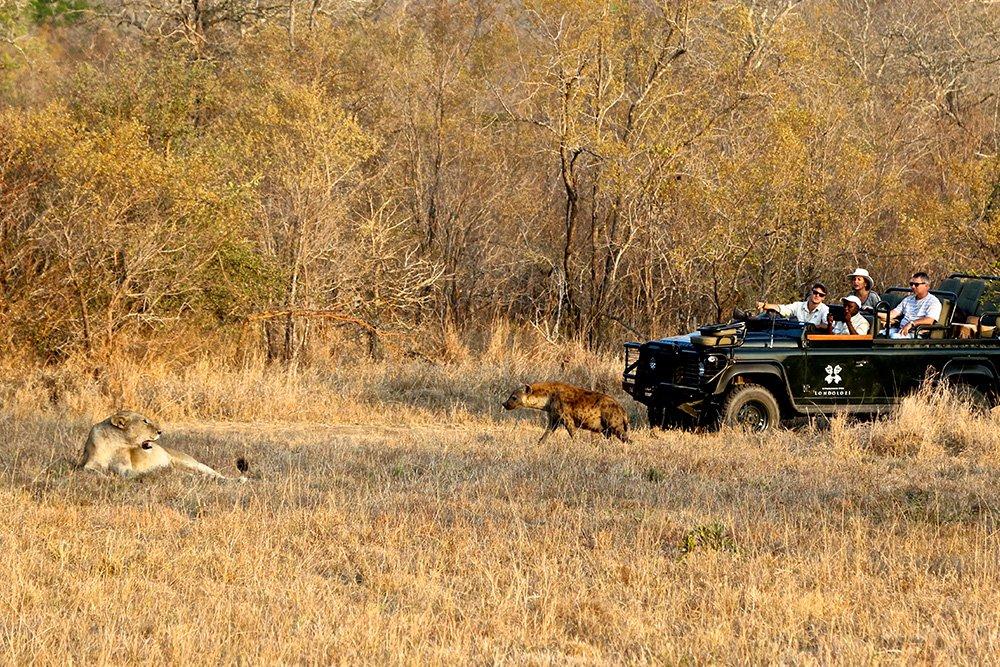 Game reserve vs National park Lion Sighting Hyena