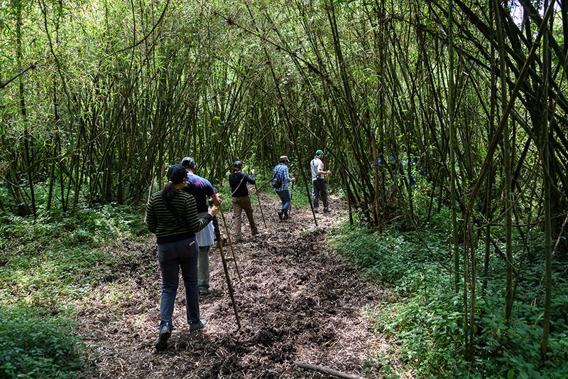 Gorilla Trek Tours Rwanda Iconic Africa Bambo Forest