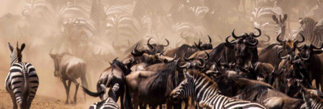 A wildlife spectacle like no other