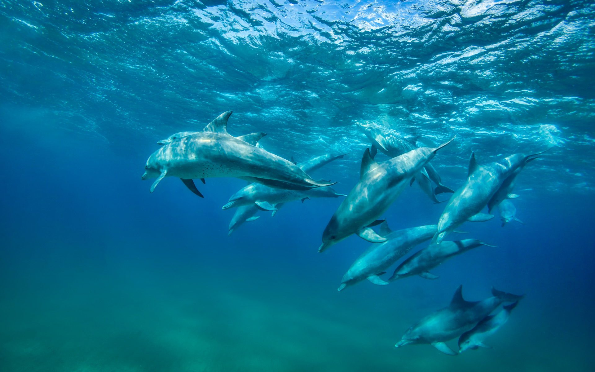 Iconic Africa Swim With Dolphins Mozambique