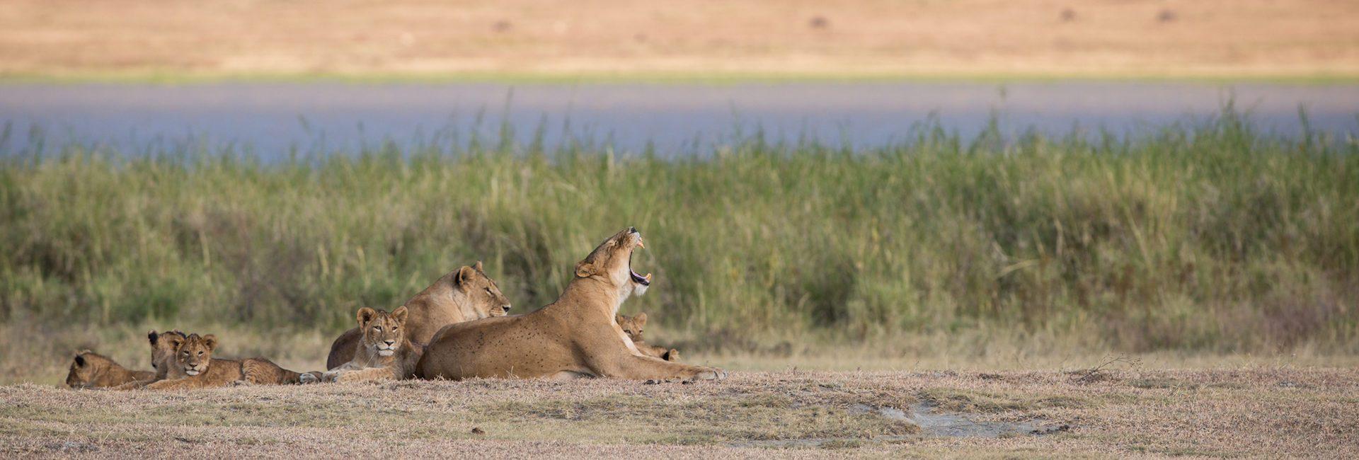 Ngorongoro-Crater-Lodge