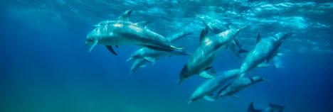 Swim alongside dolphins