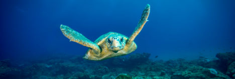 Explore the depths of the Indian Ocean