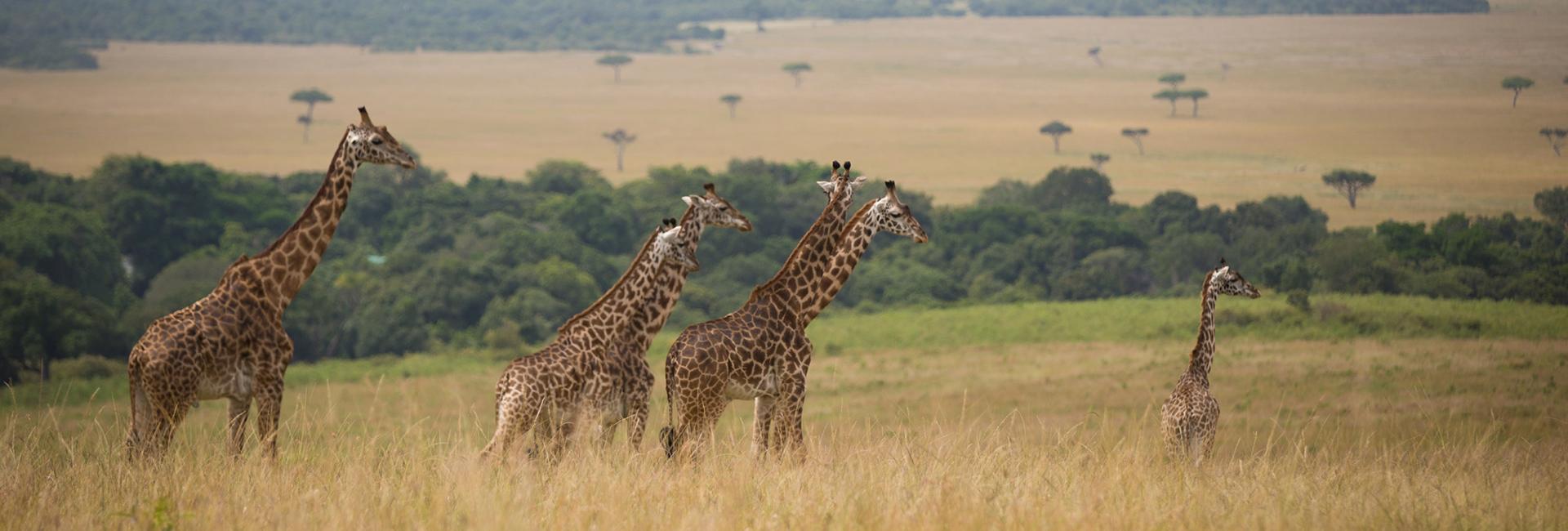 Tanzania Great Migration Experience East Africa Masaai Mara