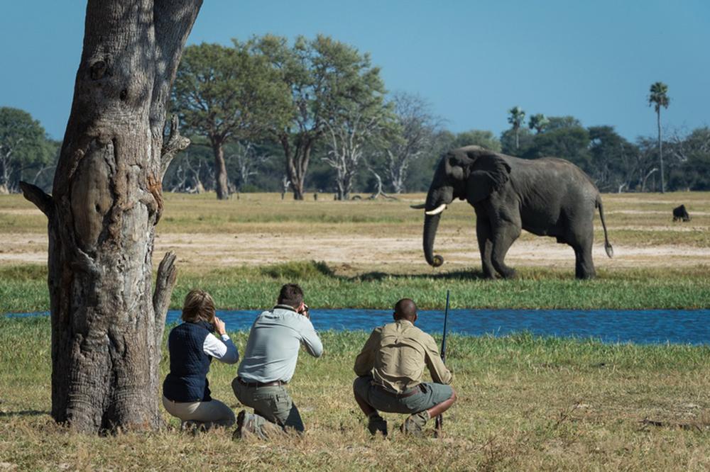 Walking Safaris Elephant Iconic Africa