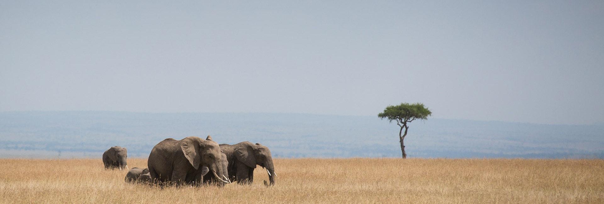 The absolute abundance of the Masai Mara