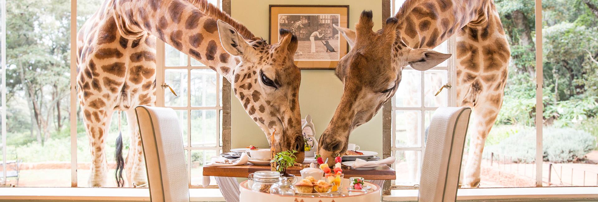 Giraffe Manor Breakfast 2