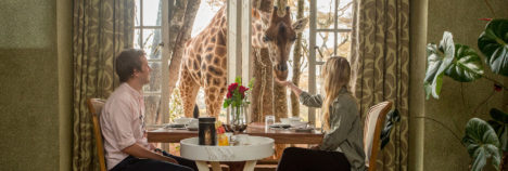 Have breakfast with the Giraffes