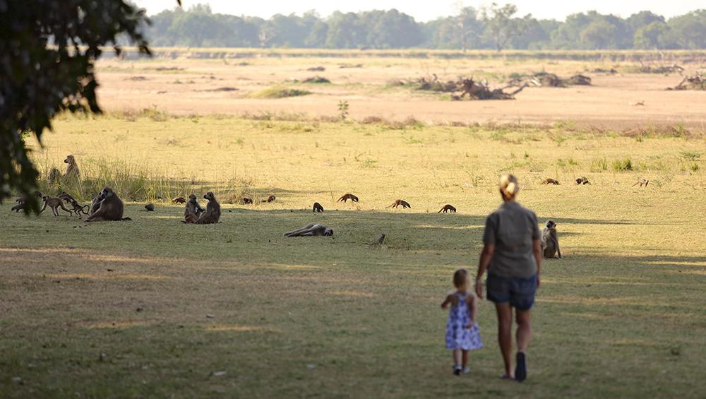 Zambia African Safari - The perfect family destination