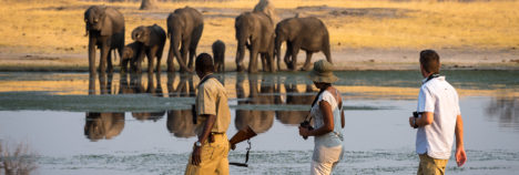 Get involved in the Hwange Elephant conservation