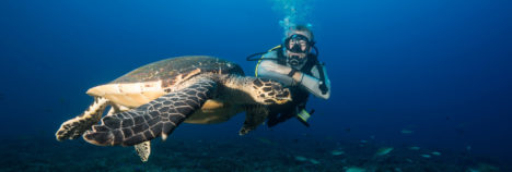 Make a difference in marine conservation in the Seychelles