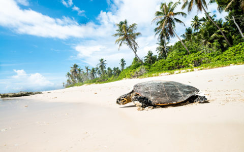 Travel With Purpose Turtles Seychelles 2