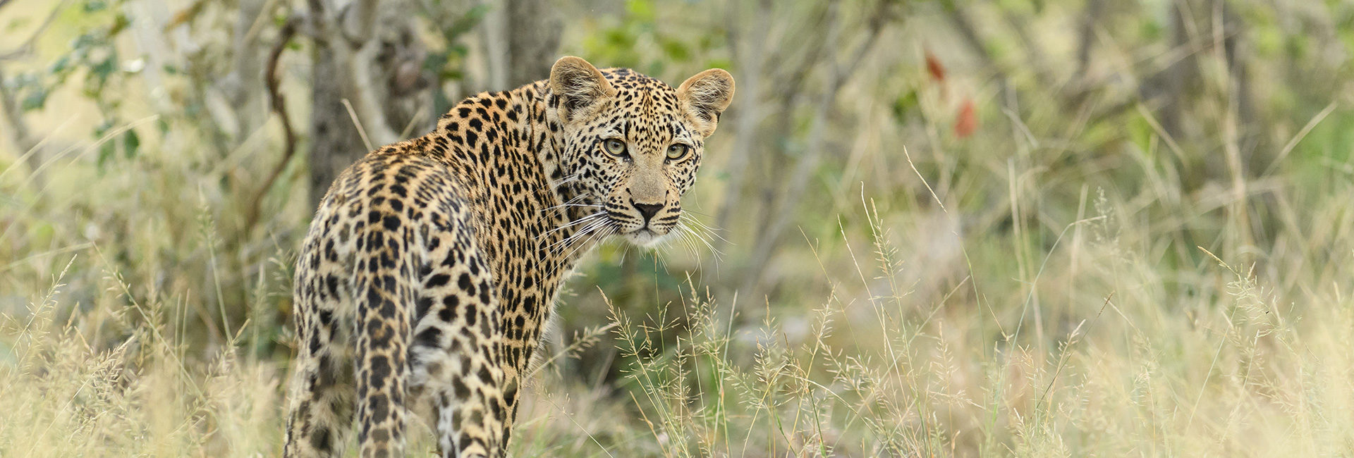 Get up close to the majestic Big Five