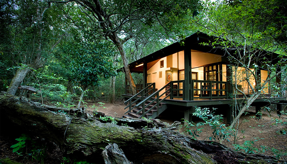 Phinda Forest Room